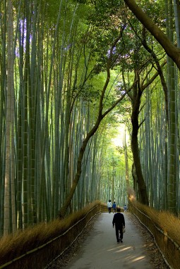 Viaje a Japn: Da 6  Kyoto y Arashiyama