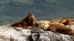 Leones marinos Ushuaia