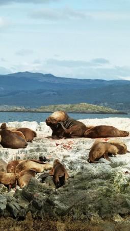 Leon marino Ushuaia